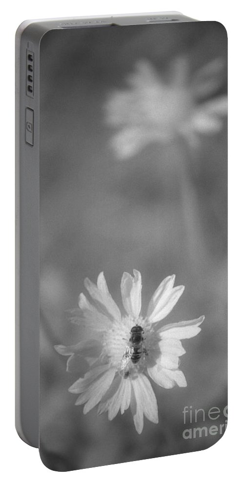 Pollinate Portable Battery Charger featuring the photograph Pollination by Richard Rizzo