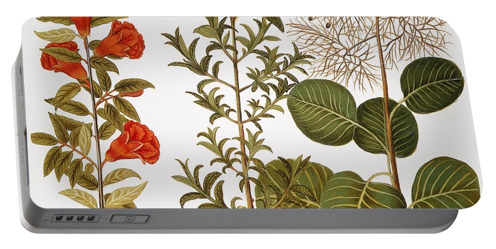 1613 Portable Battery Charger featuring the photograph Pomegranate, 1613 by Granger
