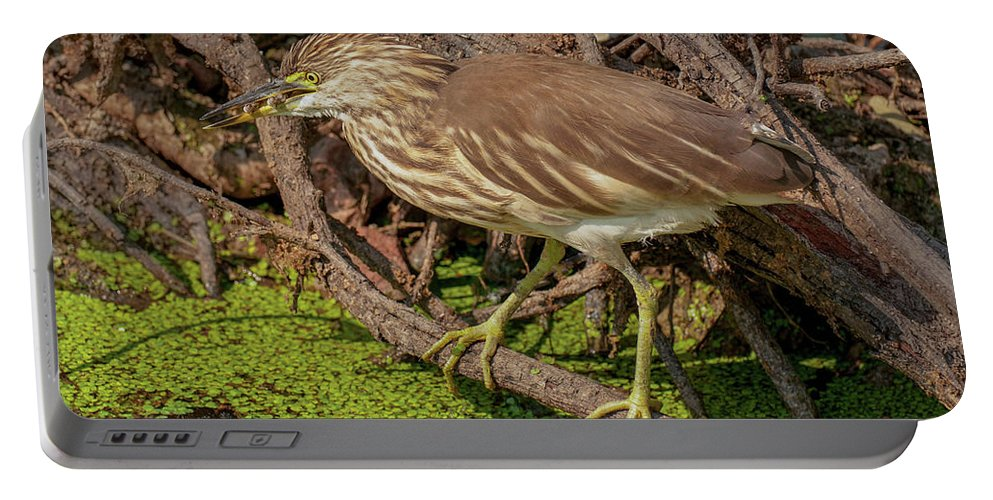 Pond Portable Battery Charger featuring the photograph Pond Heron With Fish by Manjot Singh Sachdeva