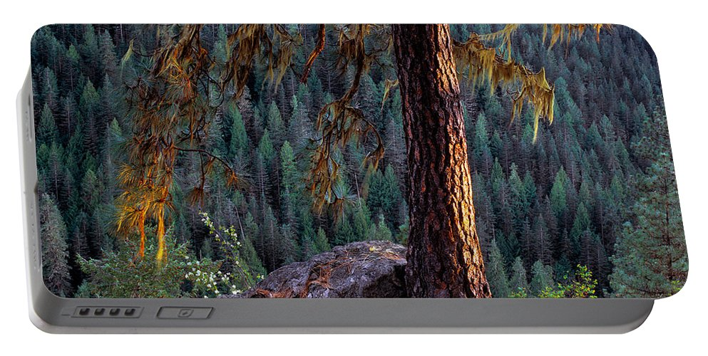 Ponderosa Pine Portable Battery Charger featuring the photograph Ponderosa Pine by Leland D Howard