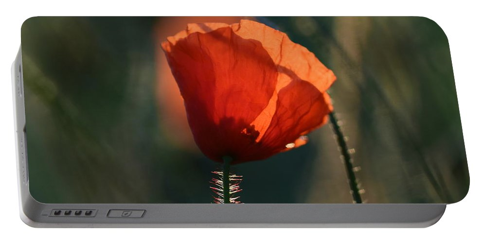 Poppies Portable Battery Charger featuring the photograph Poppiemania IIi by Rui Militao