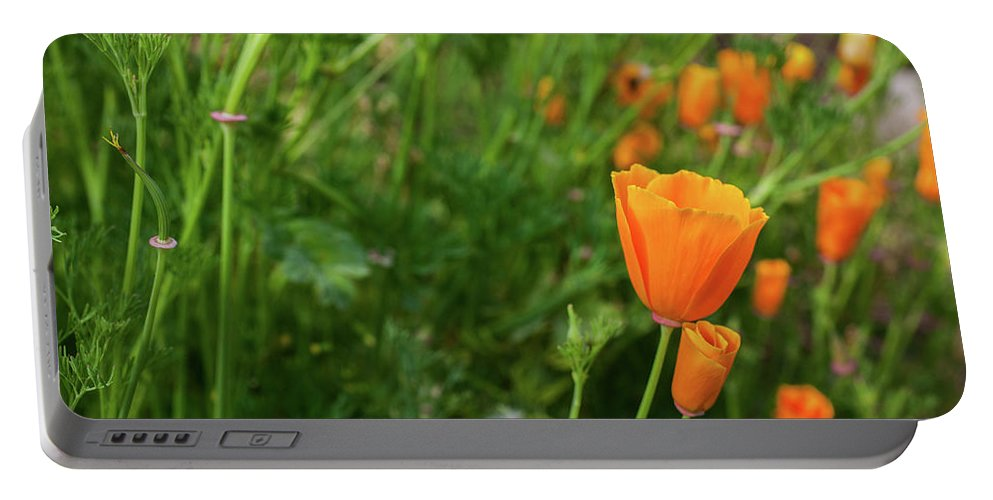 Foothills Portable Battery Charger featuring the photograph Poppies by Misty Tienken