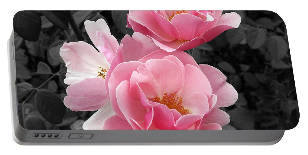 Flower Portable Battery Charger featuring the photograph Popping Pink Roses by Amy Fose