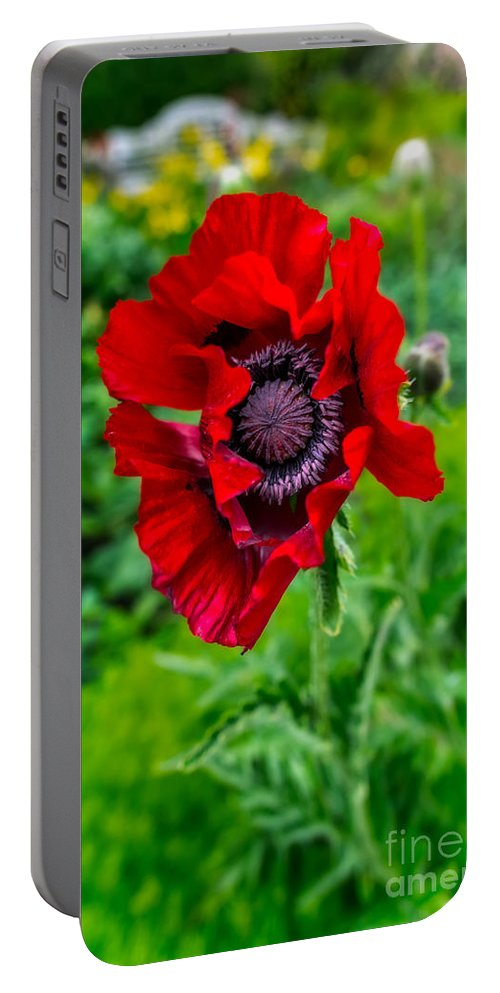 Poppy Portable Battery Charger featuring the photograph Poppy by Adrian Evans
