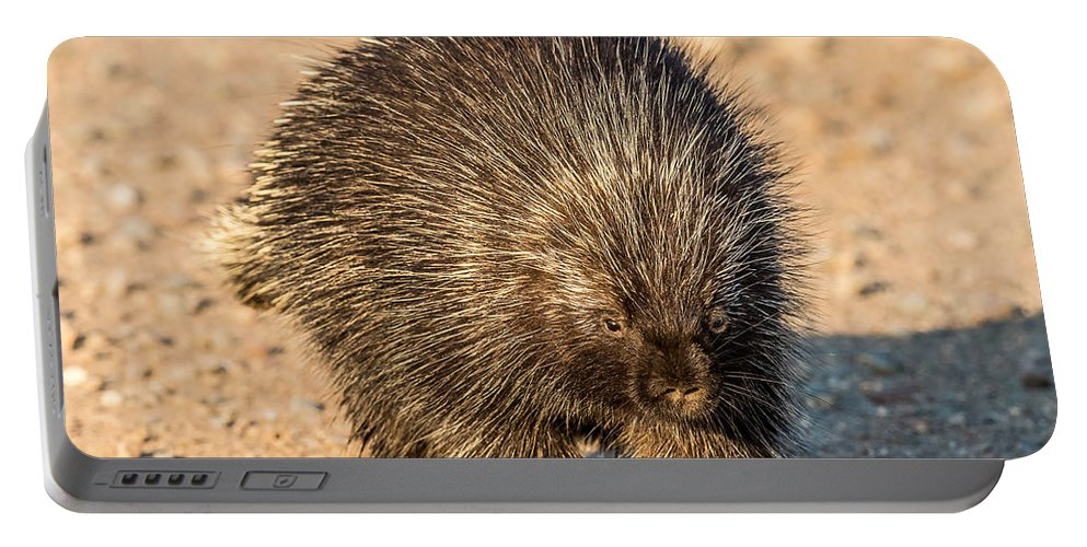 Porcupine Portable Battery Charger featuring the photograph Porcupine Walking by Paul Freidlund