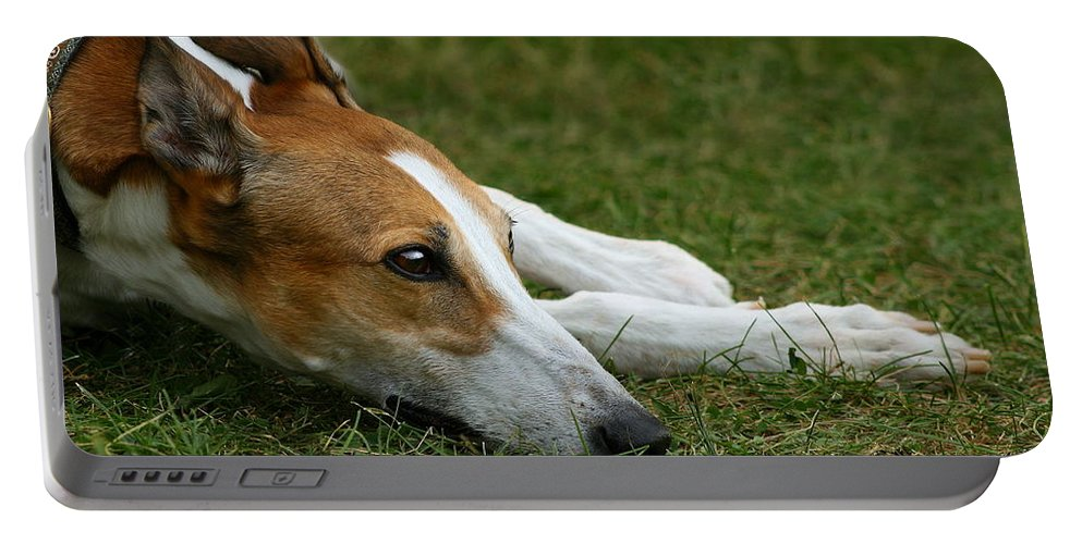 Editorial Portable Battery Charger featuring the photograph Portrait of a Greyhound - Soulful by Angela Rath