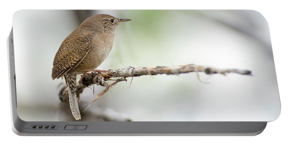 House Wren Portable Battery Charger featuring the photograph Portrait Of A House Wren by Judi Dressler