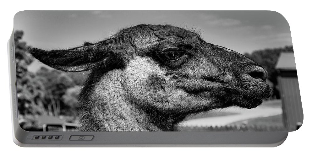 Wildlife Portable Battery Charger featuring the photograph Portrait Of A Llama Mafia Leader by Shanna Robillard