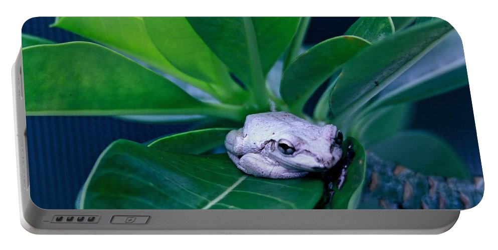 Tree-frog Portable Battery Charger featuring the photograph Portrait Of A Tree Frog by Donald Hazlett