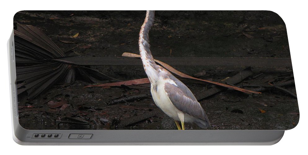 Tri-colored Heron Portable Battery Charger featuring the photograph Portrait Of A Tri-colored Heron by Barbara Bowen