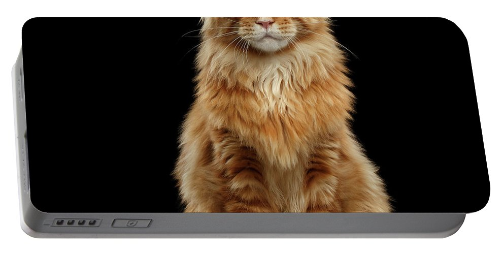 Angry Portable Battery Charger featuring the photograph Portrait Of Ginger Maine Coon Cat Isolated On Black Background by Sergey Taran