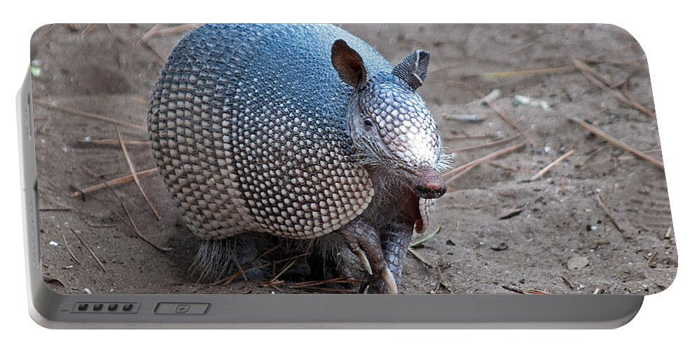 Armadillo Portable Battery Charger featuring the photograph Posing Armadillo by Kenneth Albin