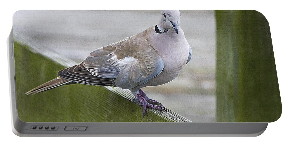 Bird Portable Battery Charger featuring the photograph Posing On The Fence by Deborah Benoit