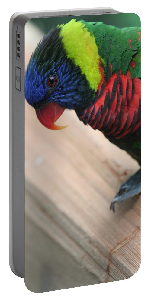 Lorikeet Portable Battery Charger featuring the photograph Post Position by Laddie Halupa