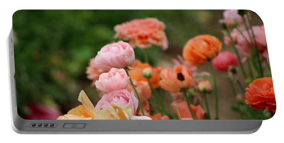 Powder Pink Ranunculus Portable Battery Charger featuring the photograph Powder Pink and Salmon Ranunculus by Colleen Cornelius