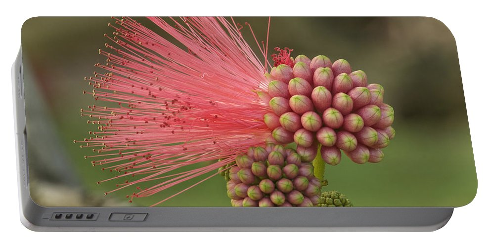 Flower Portable Battery Charger featuring the photograph Powder Puff by Michael Peychich