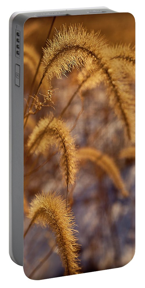 Midewin Portable Battery Charger featuring the photograph Prairie Grass Detail by Steve Gadomski