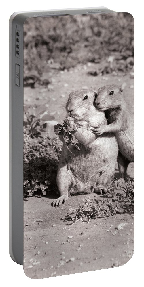 Prairie Portable Battery Charger featuring the photograph Prairie Love by Alycia Christine
