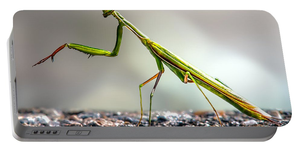 Mantis Portable Battery Charger featuring the photograph Praying Mantis by Bob Orsillo