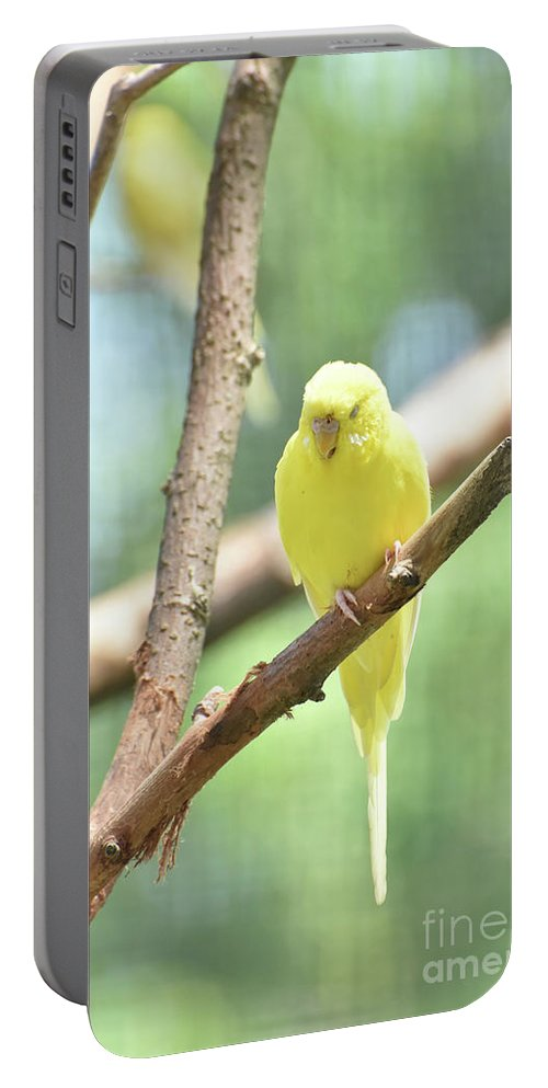 Budgie Portable Battery Charger featuring the photograph Precious Little Yellow Parakeet In The Wild by DejaVu Designs