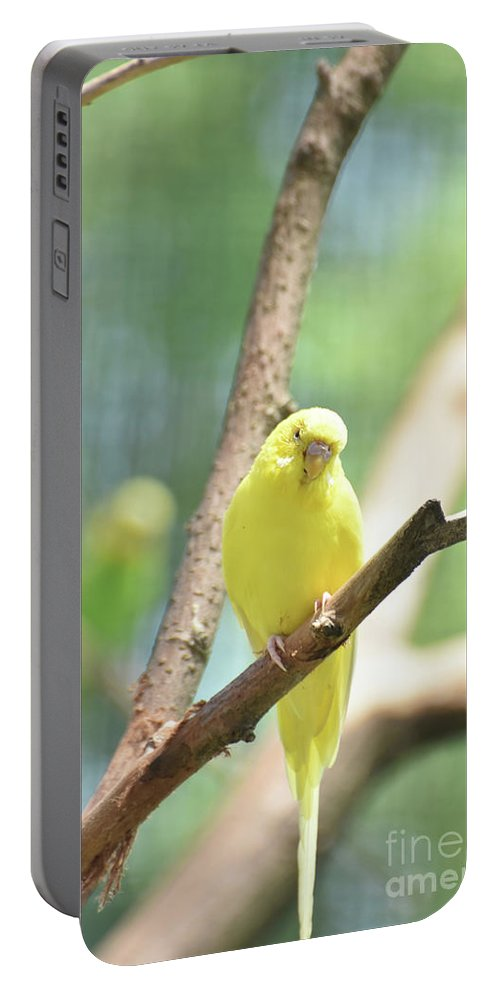 Budgie Portable Battery Charger featuring the photograph Precious Yellow Budgie Parakeeet In The Wild by DejaVu Designs