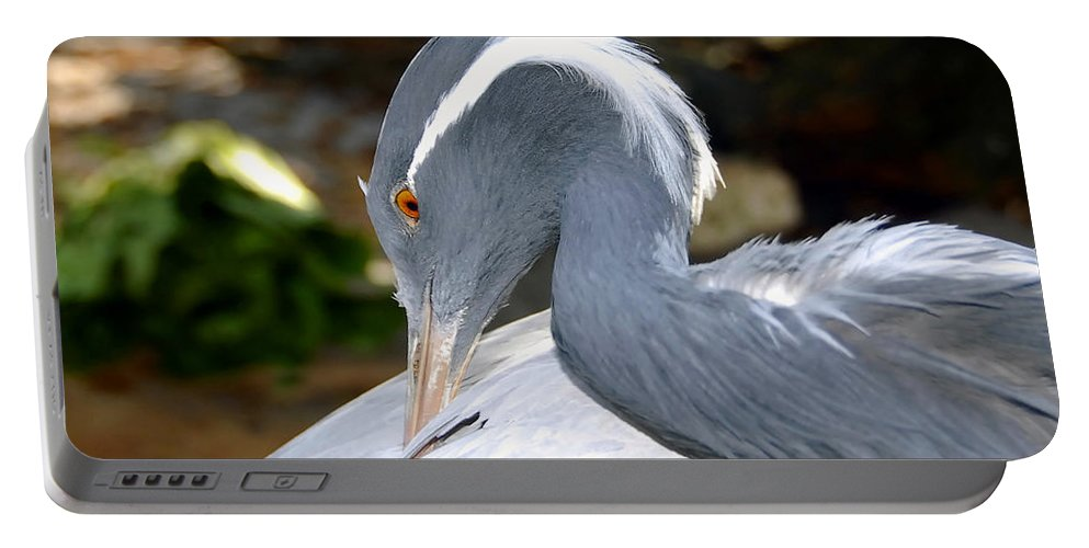 Bird Portable Battery Charger featuring the photograph Preening Bird by David Lee Thompson