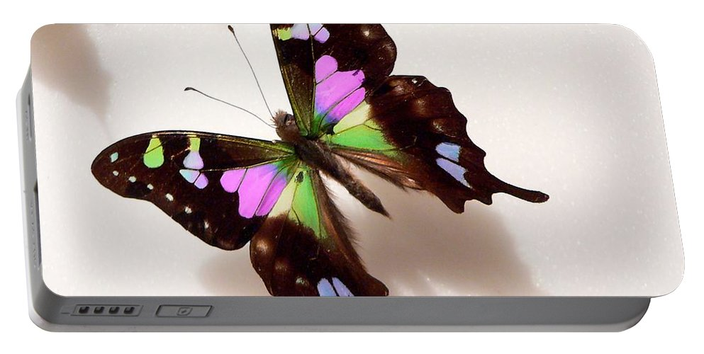 Butterflies Portable Battery Charger featuring the photograph Pretty Butterfly by Rosalie Scanlon