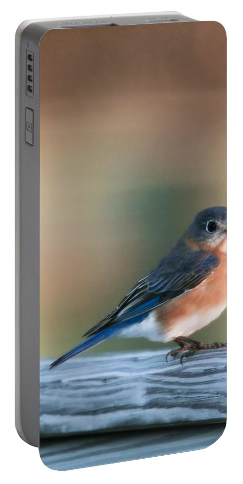 Bird Portable Battery Charger featuring the photograph Pretty In Blue by Phill Doherty