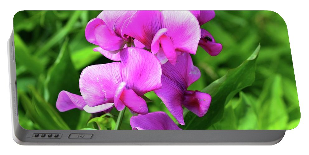 Nature Portable Battery Charger featuring the photograph Pretty Pink Sweetpea by Lyle Crump