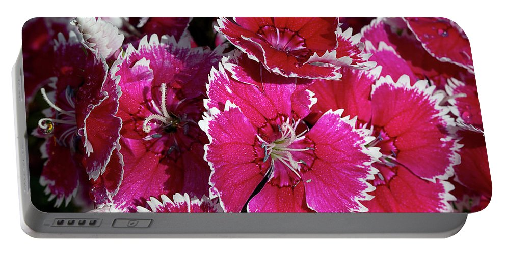Dianthus Portable Battery Charger featuring the photograph Pretty Pinks by Phyllis Denton