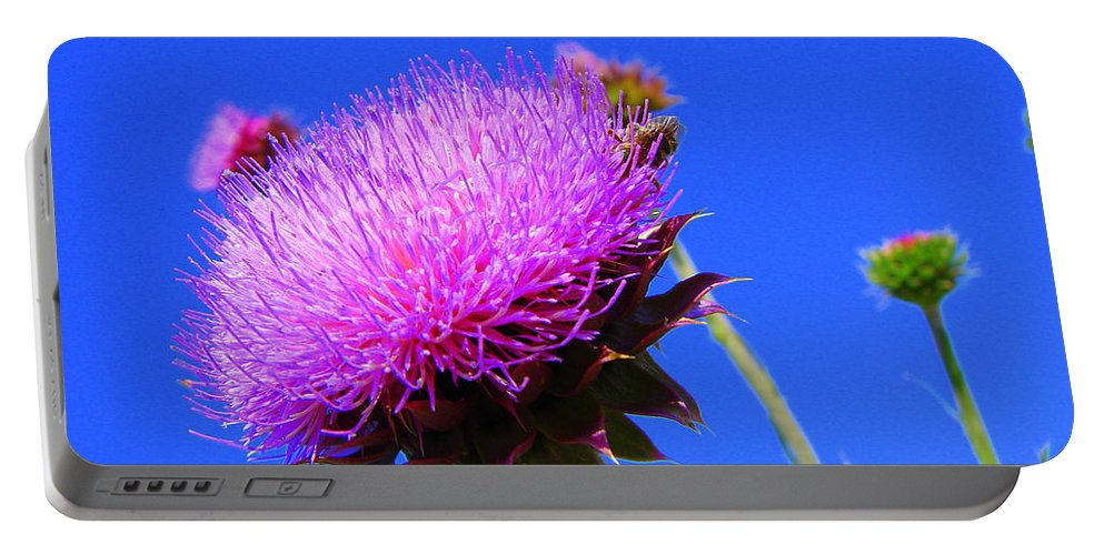 Thistle Bloom Portable Battery Charger featuring the photograph Pretty Weed by J R  Seymour