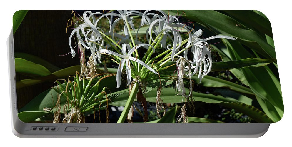 Flowers Portable Battery Charger featuring the photograph Pretty White Flowers by William Tasker
