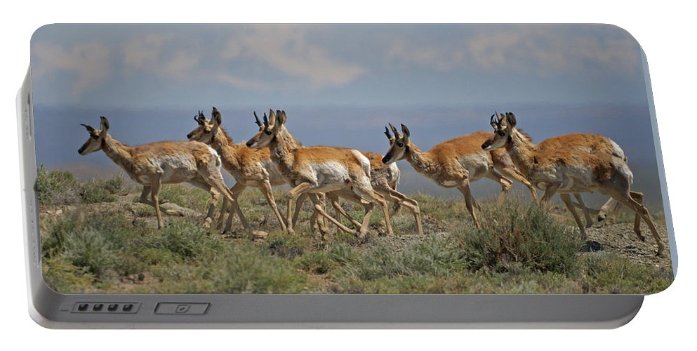 Pronghorn Portable Battery Charger featuring the photograph Pronghorn Antelope Running by Heather Coen
