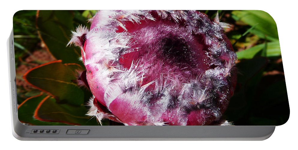 Africa Portable Battery Charger featuring the photograph Protea Flower 1 by Xueling Zou