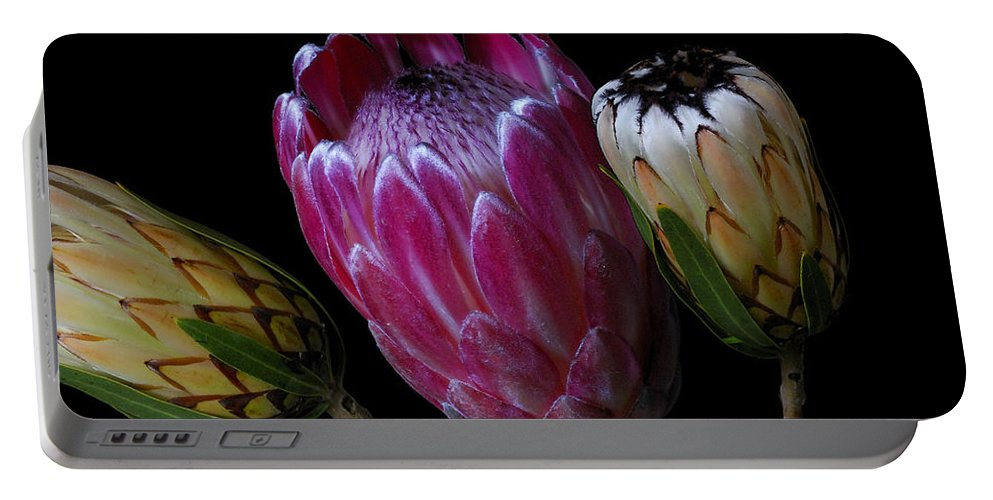 Proteas Portable Battery Charger featuring the photograph Proteas by Wayne Sherriff