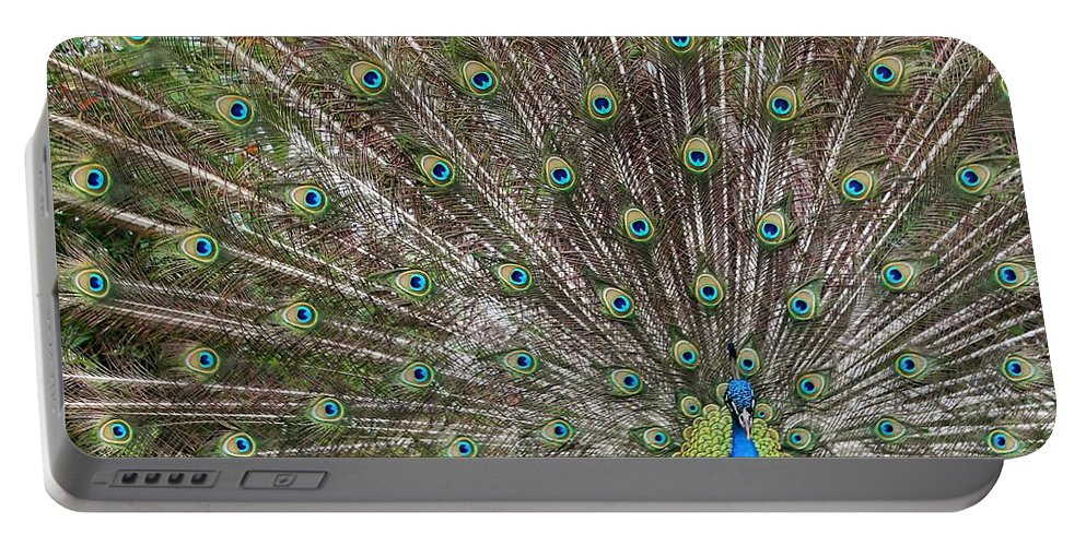 Peacock Portable Battery Charger featuring the photograph Proud Peacock by Sabrina L Ryan