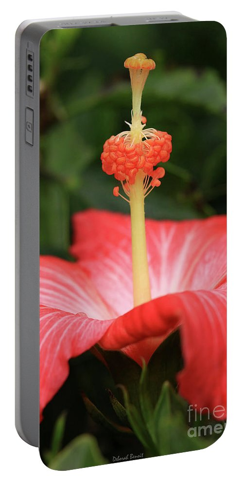 Hibiscus Portable Battery Charger featuring the photograph Provocative Hibiscus by Deborah Benoit