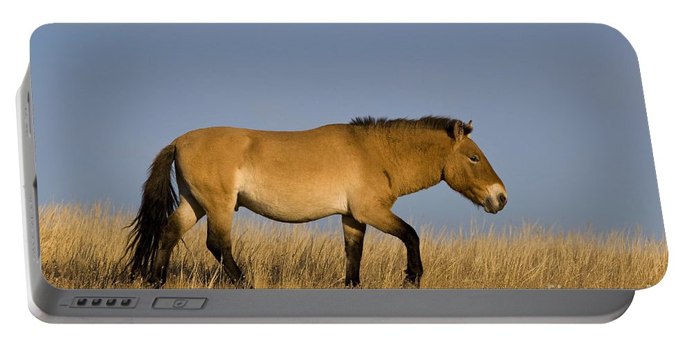 Przewalski's Horse Portable Battery Charger featuring the photograph Przewalskis Stallion by Jean-Louis Klein & Marie-Luce Hubert