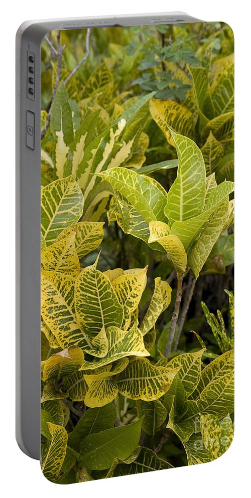 El Dorado Portable Battery Charger featuring the photograph Pseuderanthemum Carruthersii by Jean-Louis Klein & Marie-Luce Hubert