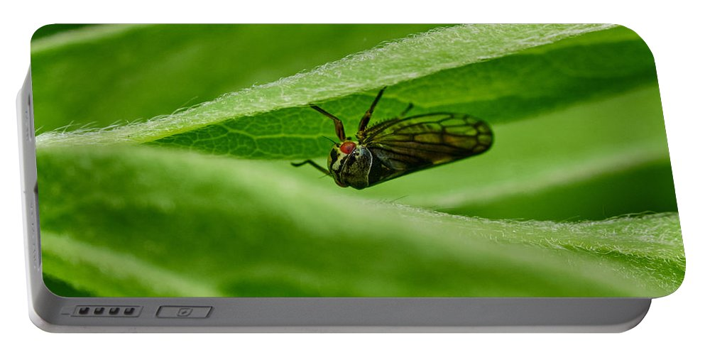 Finland Portable Battery Charger featuring the photograph Psyllid by Jouko Lehto