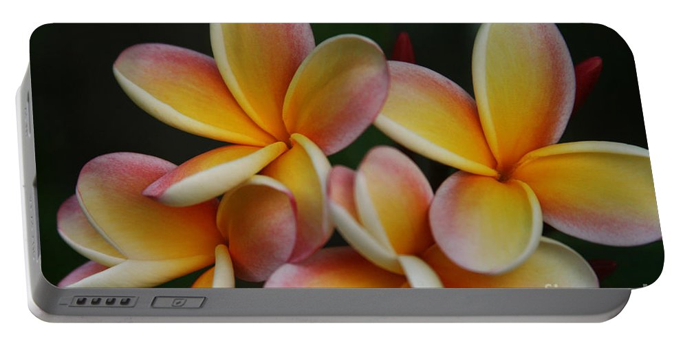 Aloha Portable Battery Charger featuring the photograph Pua Melia Plumeria Kuulei Haiku by Sharon Mau