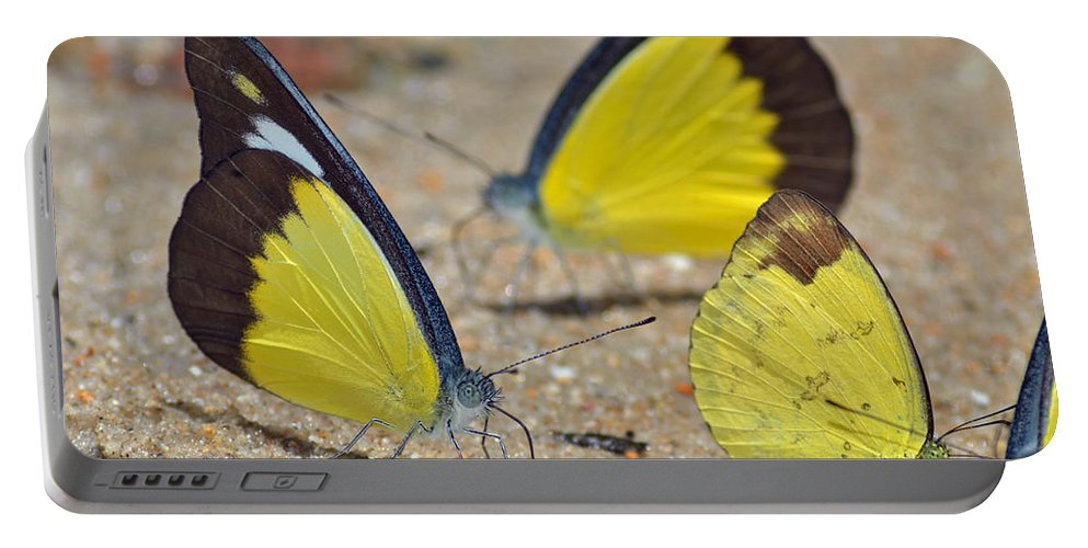 Butterflies Portable Battery Charger featuring the photograph Puddling by Rashdy Arshad