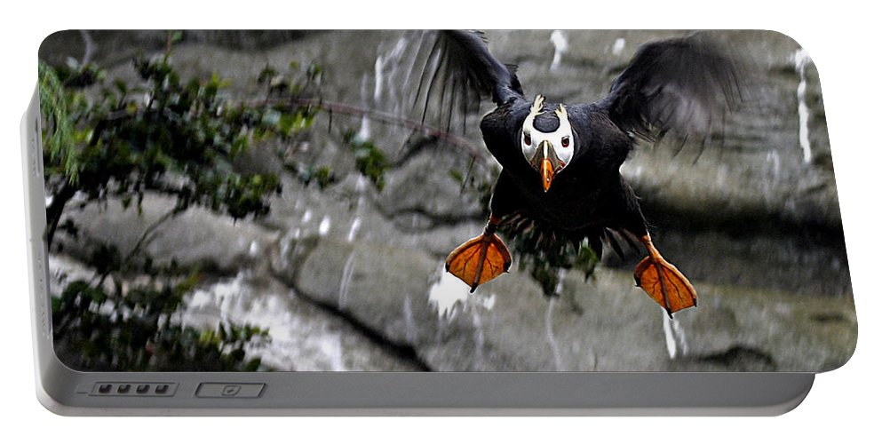 Flying Puffin Portable Battery Charger featuring the photograph Jumpin Puffin by Jean Noren