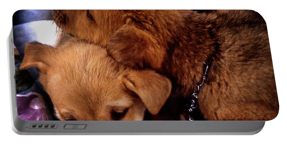Puppies Portable Battery Charger featuring the photograph Puppies by Samuel M Purvis III