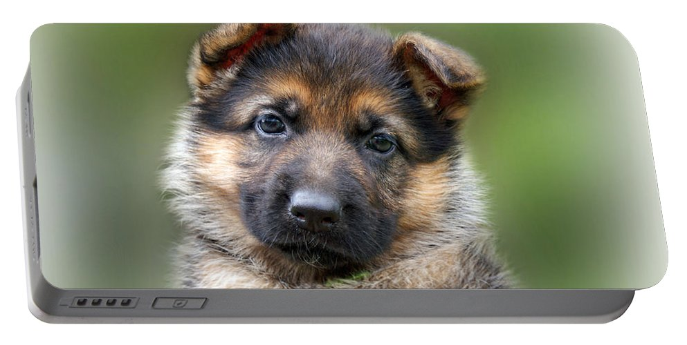 Puppies Portable Battery Charger featuring the photograph Puppy Portrait by Sandy Keeton