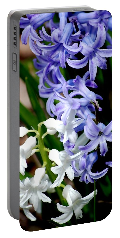 Digital Photography Portable Battery Charger featuring the photograph Purple And White Hyacinth by David Lane