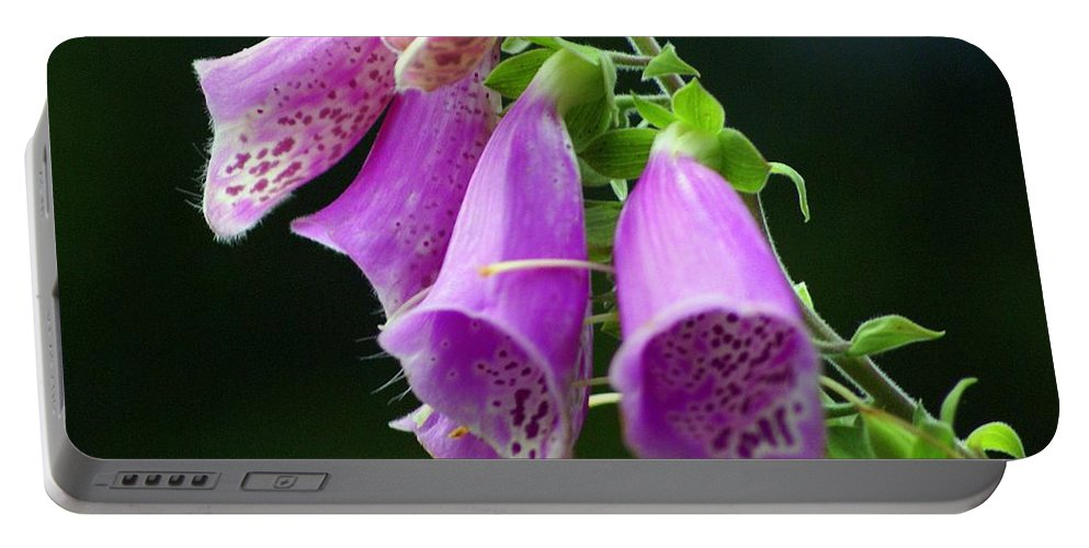 Flowers Portable Battery Charger featuring the photograph Purple Bells Horizontal by Marty Koch
