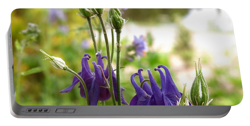 Columbine Portable Battery Charger featuring the photograph Purple Columbines by Tim Beebe