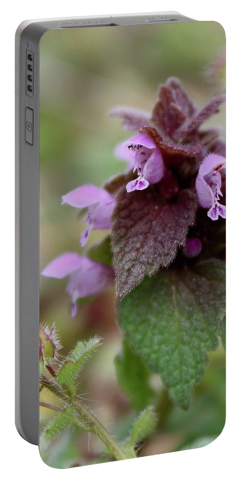 Photography Portable Battery Charger featuring the photograph Purple Deadnettle Bloom by Mandy Elliott