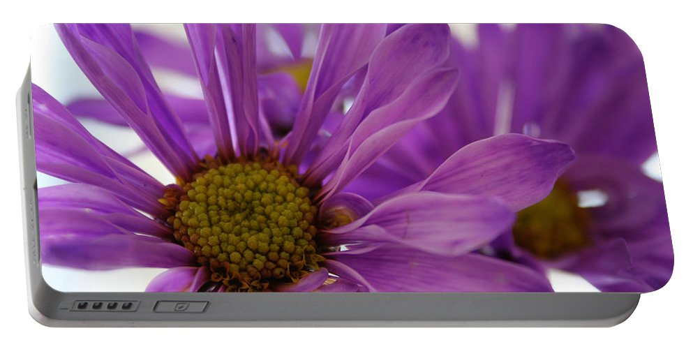 Flowers Purple Macro Daisy Spring Yellow Digital Photography Portable Battery Charger featuring the photograph Purple Delight by Linda Sannuti